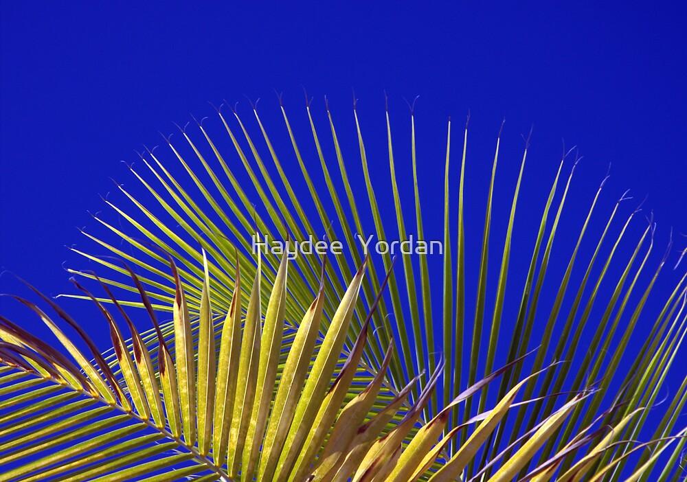 Palm and Sky by Haydee  Yordan