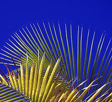 Palm and Sky by Haydee  Yordan