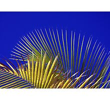 Palm and Sky Photographic Print