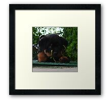 In The Jungle ...The Mighty Jungle Framed Print