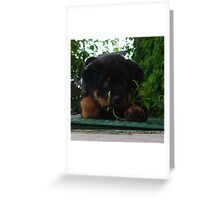 In The Jungle ...The Mighty Jungle Greeting Card