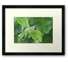 Momma Watching Framed Print