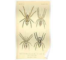 The Animal Kingdom by Georges Cuvier, PA Latreille, and Henry McMurtrie 1834  390 - Arachnides Arachnids Poster
