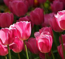 Pink Tulips by Béla Török