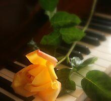 Rose by Stephanie Sim
