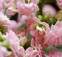 Tiny Pink Flowers by awanderingsoul