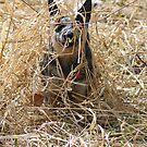 Hide-n-Peek by Fotography by Felisa ~