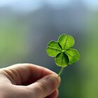 Four Leaf Clover by tanjica