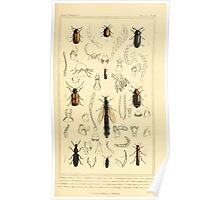 The Animal Kingdom by Georges Cuvier, PA Latreille, and Henry McMurtrie 1834  437 - Insecta Insects Poster