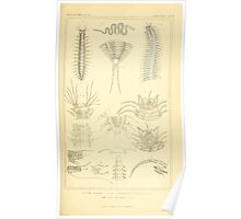 The Animal Kingdom by Georges Cuvier, PA Latreille, and Henry McMurtrie 1834  297 - Annelides Large Invertebrates or Worms Poster
