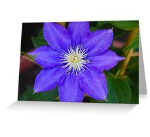 *H.F. YOUNG CLEMATIS* Greeting Card