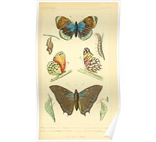 The Animal Kingdom by Georges Cuvier, PA Latreille, and Henry McMurtrie 1834  506 - Insecta Insects Poster