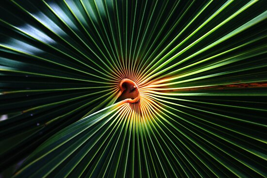 Palm art by kathy s gillentine