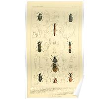 The Animal Kingdom by Georges Cuvier, PA Latreille, and Henry McMurtrie 1834  464 - Insecta Insects Poster