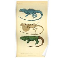 The Animal Kingdom by Georges Cuvier, PA Latreille, and Henry McMurtrie 1834  017 - Reptilia Reptiles Poster