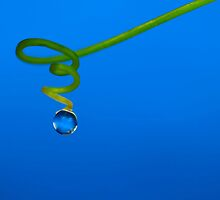 Drop on a spiral by Tony Eccles