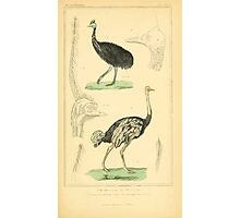 The Animal Kingdom by Georges Cuvier, PA Latreille, and Henry McMurtrie 1834 754 - Aves Avians Birds Photographic Print