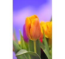 Orange Tulip Photographic Print