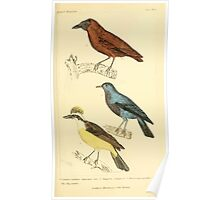 The Animal Kingdom by Georges Cuvier, PA Latreille, and Henry McMurtrie 1834 659 - Aves Avians Birds Poster