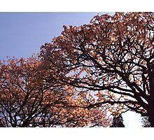 Spring in Newlands Park Photographic Print