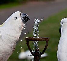 Schoolyard Gossip over the bubbler by David Petranker