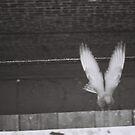 free spirit by erekag