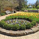 Tulip Time In Mill Creek Park by Jack Ryan