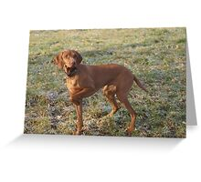 Cute Hungarian Vizsla Greeting Card