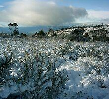 View from Mt Rowland, Tasmania  by HohnkE