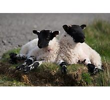 The Resting Of The Lambs Photographic Print