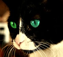 Beautiful Green And Blue Eye Cat by terrebo