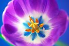 Tulip Tapestry by Renee Hubbard Fine Art Photography