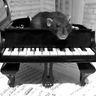 Won't you play me a song? by HannahT