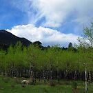 Rocky Mountain Spring by Jan Landers