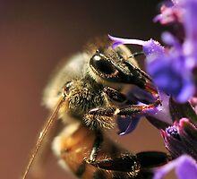 BEE - Up Close and Personal by Dennis Stewart