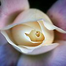 December Rose by crossmark