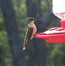 Early Bird Sittin' Pretty by WalnutHill
