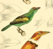 The Animal Kingdom by Georges Cuvier, PA Latreille, and Henry McMurtrie 1834 703 - Aves Avians Birds Sticker