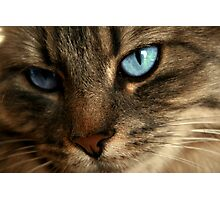 Close Up Of Blue Eyes Cat Photographic Print
