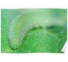 Cabbage Moth Caterpillar Poster