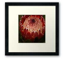 Waking up ! Framed Print