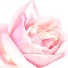 pink folds 1 by Nurgen ~~