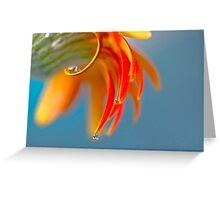 Drops on petals Greeting Card