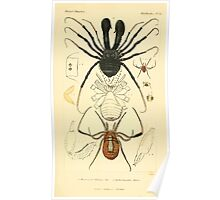 The Animal Kingdom by Georges Cuvier, PA Latreille, and Henry McMurtrie 1834  404 - Arachnides Arachnids Poster