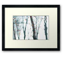 Crying Birch-trees Framed Print