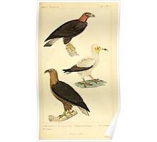 The Animal Kingdom by Georges Cuvier, PA Latreille, and Henry McMurtrie 1834 642 - Aves Avians Birds Poster