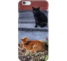 Two Cats in the Yard iPhone Case/Skin