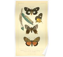 The Animal Kingdom by Georges Cuvier, PA Latreille, and Henry McMurtrie 1834  513 - Insecta Insects Poster