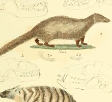 The Animal Kingdom by Georges Cuvier, PA Latreille, and Henry McMurtrie 1834 593 - Mammalia Mammals Sticker