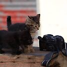 Kittens by Rosemaree